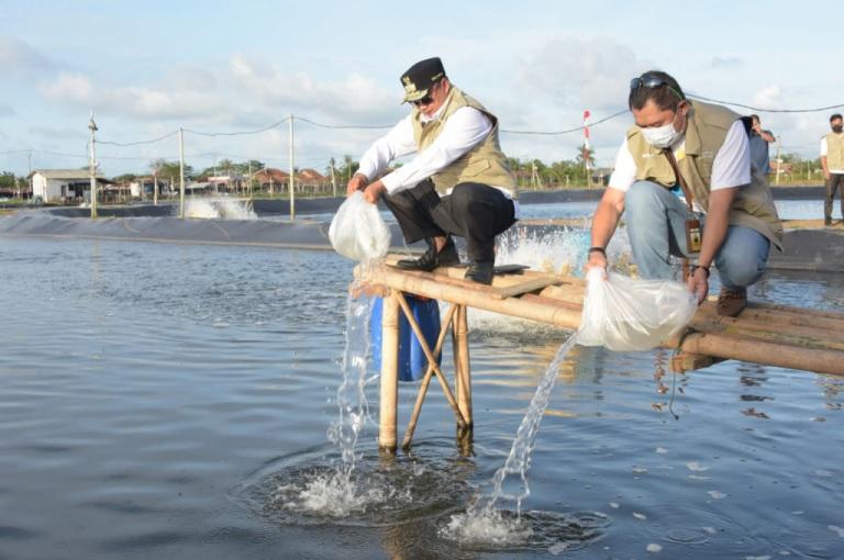 Pembudidaya Ikan Milenial Mulai Budi Daya Udang Vaname